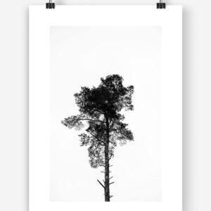 Baum Mockup