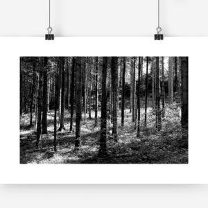 Wald Mockup